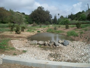 Pond lined with rocks