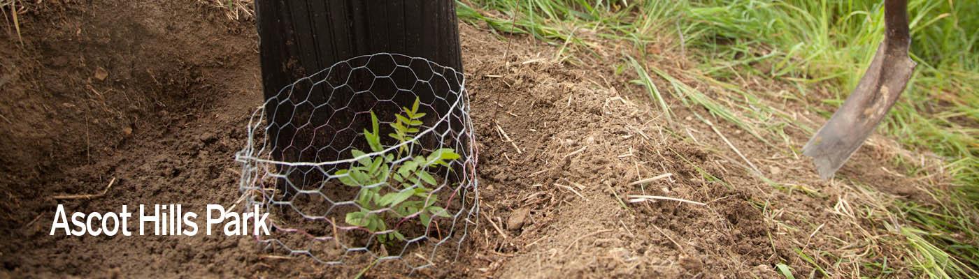 planting a tre seedling